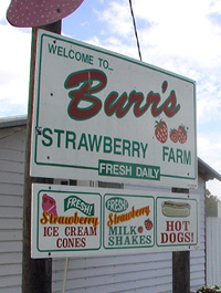 Burr's Strawberry Farm