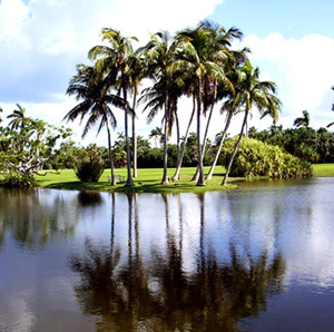 Palm trees by a pond.